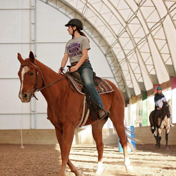Amigo-Horse-Photo.jpg