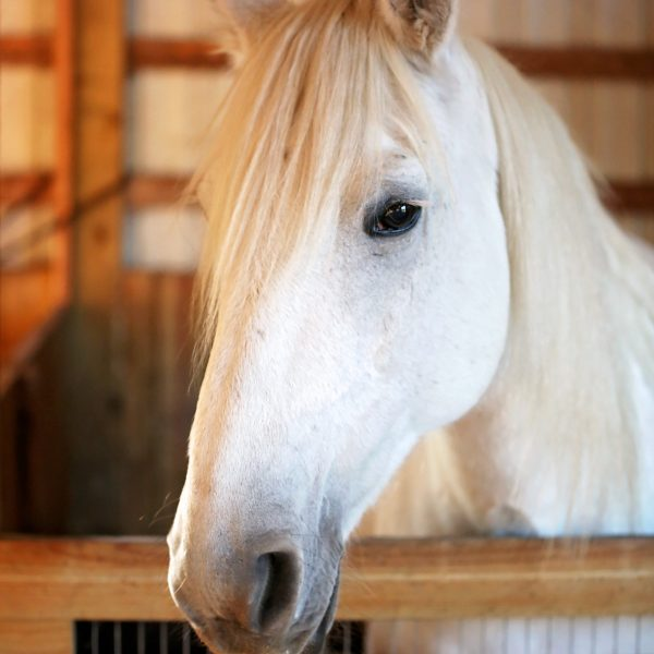 Daisy-Horse-Photo.jpg