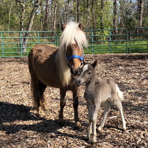 Poppy-horse-photo-.jpg