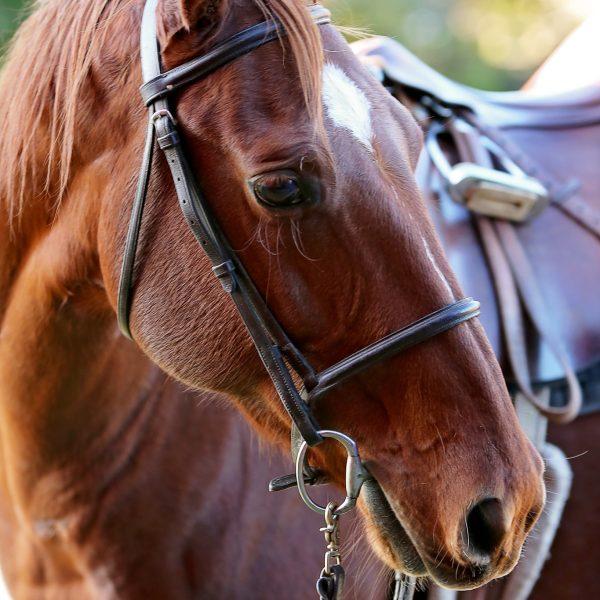 Relax-horse-photo.jpg