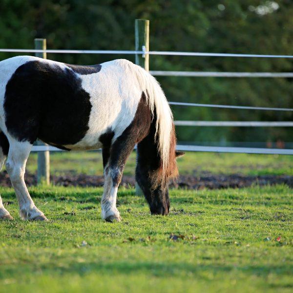 Snoopy-Horse-Photo.jpg