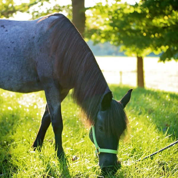 blitz-horse-page_48947388111_o.jpg