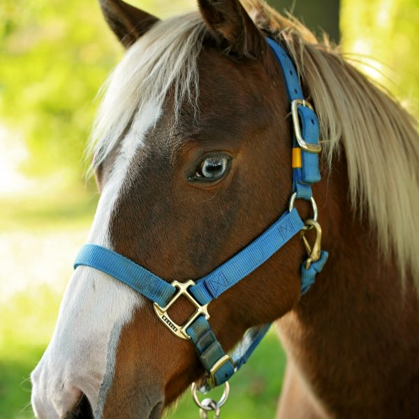 romeo-horsepage_48947582137_o.jpg
