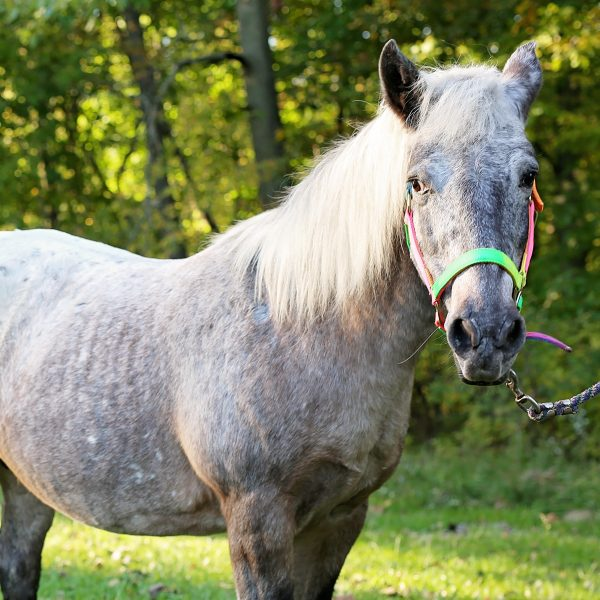smokey-horse-photo_crop.jpeg
